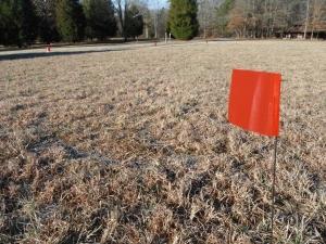 surveyed field